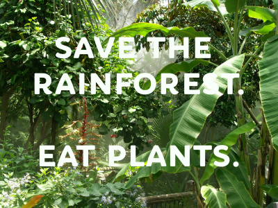 Day 25 - Save the Rainforest